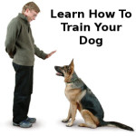 How to train a dog well with self dog training