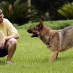 Doggy Dan's online dog trainer review – a complete guide to solve all your dog and puppy problems