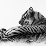 Discover the tips of beautiful animal drawings with drawing animals in pencil