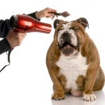 Dog grooming school – becoming a certified pet groomer with online grooming school