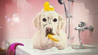 dog grooming school