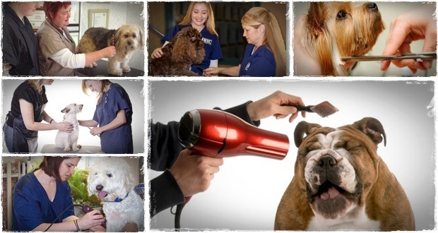 dog grooming schools in ohio