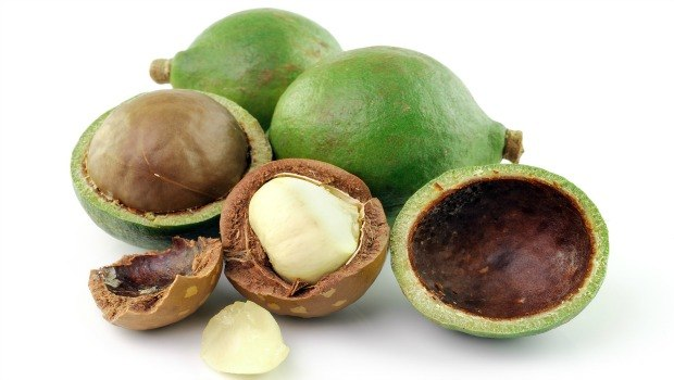 macadamia nuts download