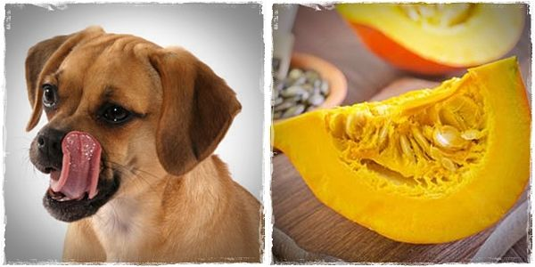 healthy foods for dogs to eat