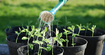 home gardening tips for beginners