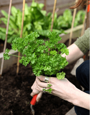 home gardening tips vegetables