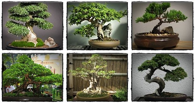 how to care for bonsai tree review