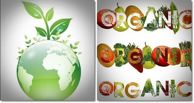 benefits of organic food production