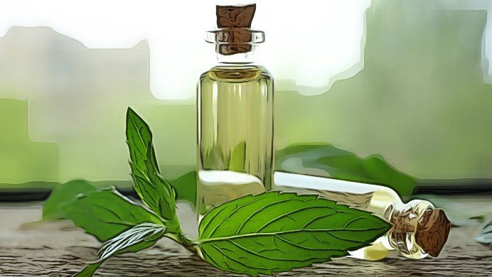 benefits of peppermint oil program