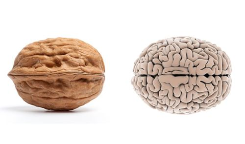 health benefits of nuts and seeds book for brain