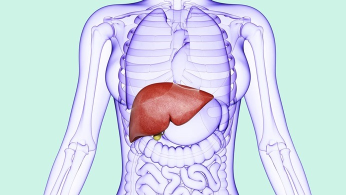 how to improve liver