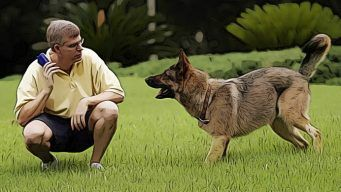 secrets to training a dog