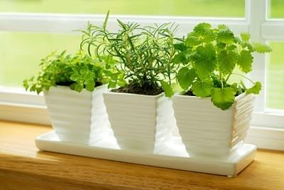 eating healthy on a budget with grow your own herbs