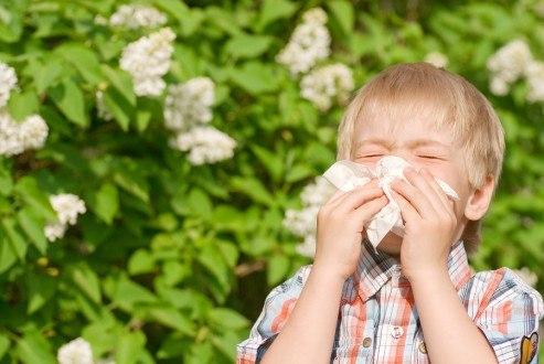 home remedies for allergies with natural and safe remedies for seasonal allergy