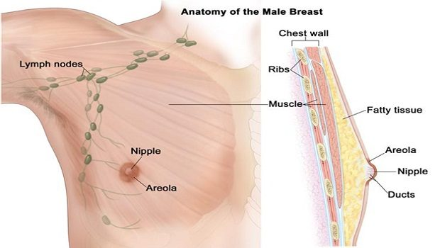 causes of breast cancer in male review