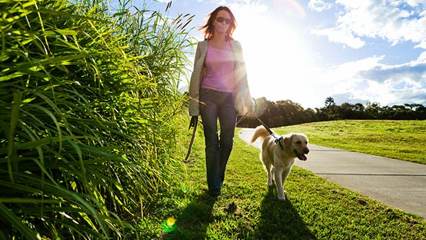 Go Along With A Pet When Taking A Walk