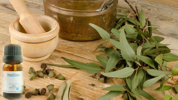 eucalyptus oil review
