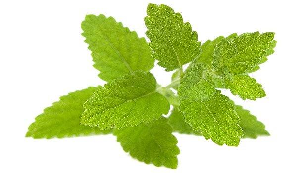 Apply lemon balm