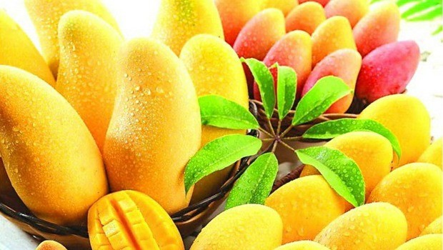Mango fruit is rich in vitamins and minerals download