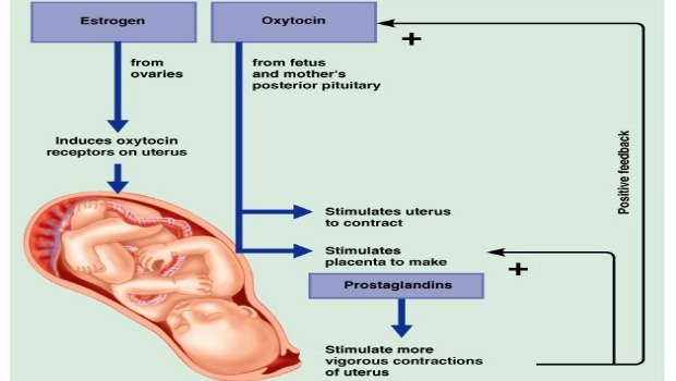 avoid oxytocin & prostaglandin download