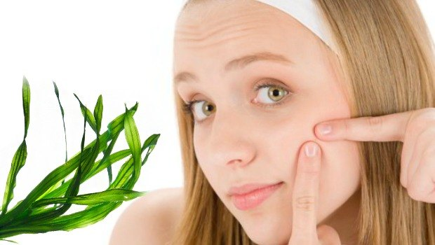 seaweed helps beat acne
