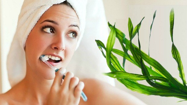 seaweed helps keep your bones and teeth strong download