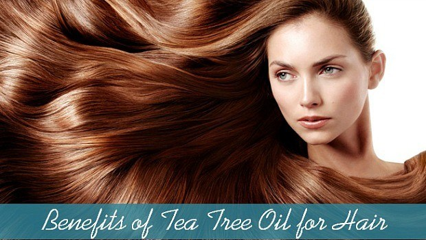 how to use tea tree oil as a hair care download