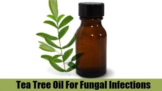 use tea tree oil for fungal infections download