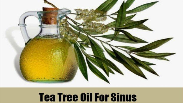 use tea tree oil for sinus infections download