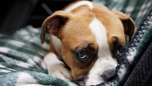 symptoms of dog depression