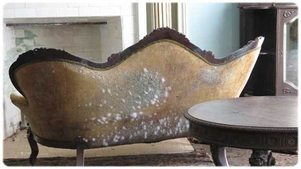 how to get rid of mold – on joineries