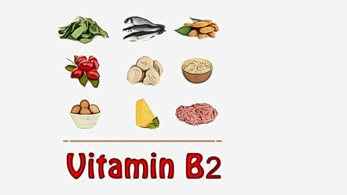 foods high in vitamin b