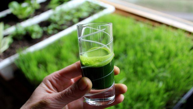 home remedies for abscess tooth-wheatgrass juice