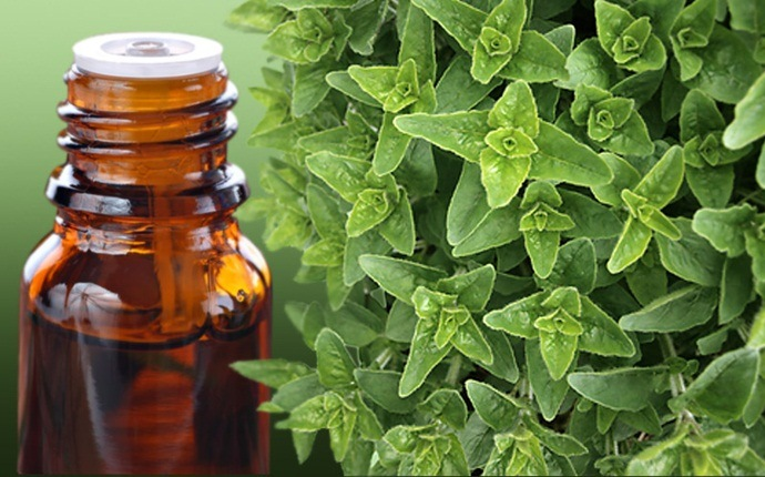 home remedies for abscess tooth - oregano oil