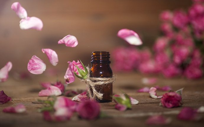 essential oils for oily skin - rose essential oil