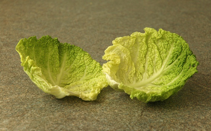 home remedies for tendonitis - cabbage leaves