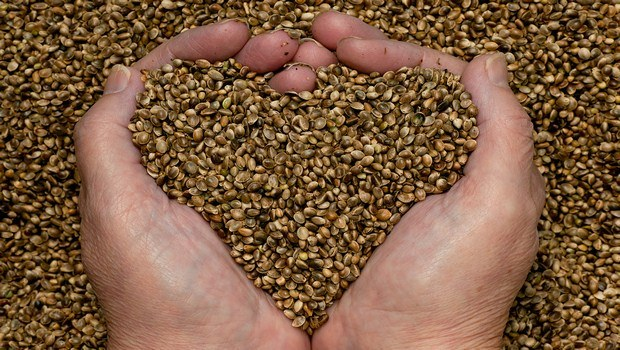 foods for muscle recovery-hempseed