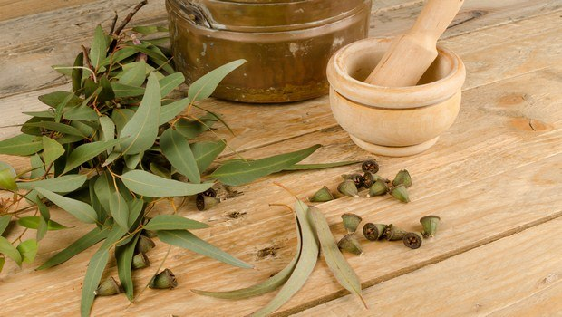 home remedies for Sneezing-eucalyptus oil