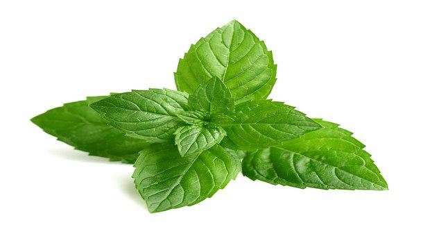 home remedies for appendicitis-mint