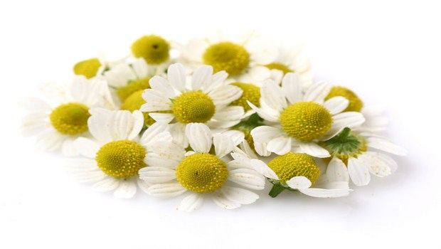 home remedies for ear congestion-chamomile