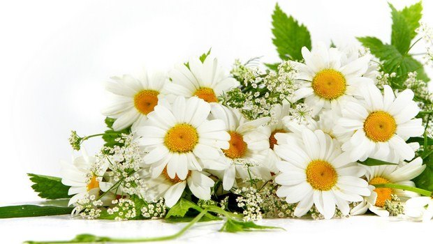 home remedies for eye infections-chamomile