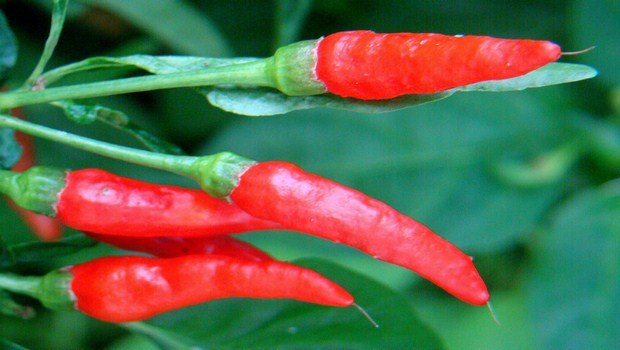 home remedies for obesity-cayenne pepper