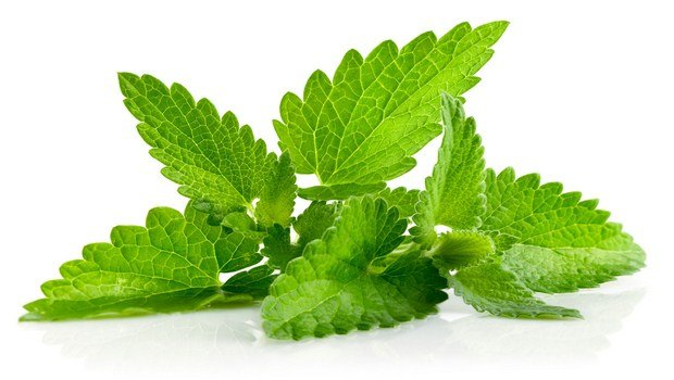 how to cure a fever-mint