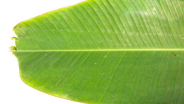 how to get rid of cramps-banana leaf