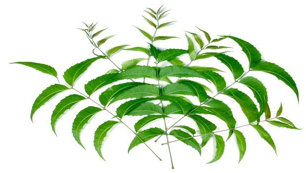 how to get rid of dermatitis-neem