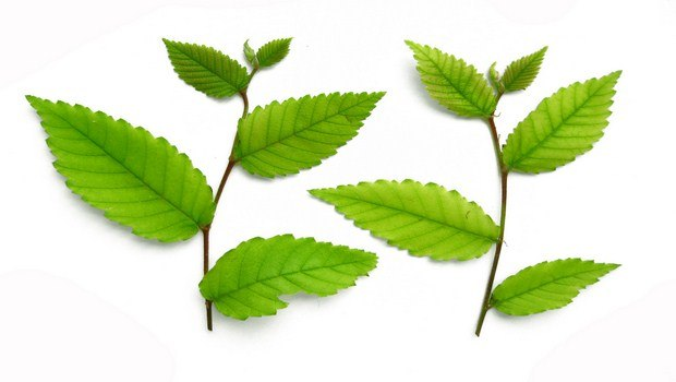 how to get rid of dermatitis-slippery elm