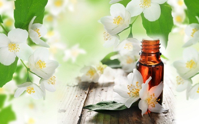 essential oils for weight loss - jasmine essential oil