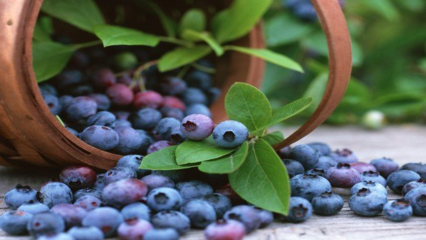natural remedies for macular degeneration-bilberry