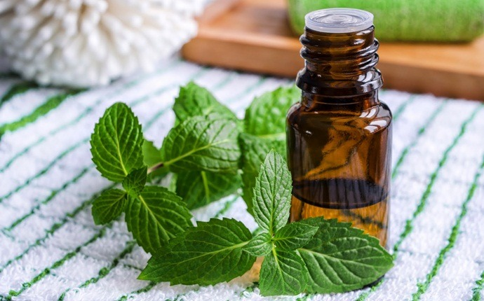 essential oils for weight loss - spearmint essential oil