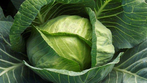 vitamin c rich foods-cabbage family